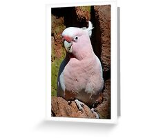 Pink Cockatoo Outside Tree Hollow Greeting Card
