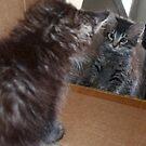 Mikino - Kitten Reflection by Jaeda DeWalt