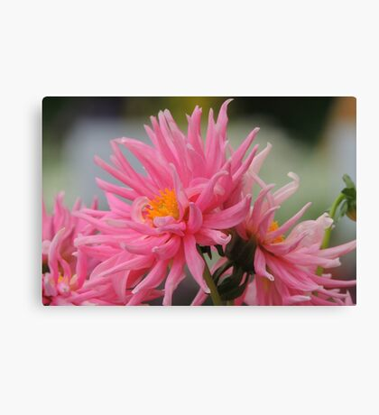 Pretty Pink flowers Canvas Print