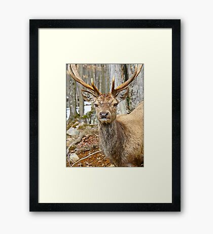 Check out my rack Framed Print
