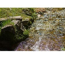 stream in the forest Photographic Print