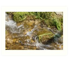 stream in the forest Art Print