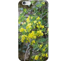 flowers in the rock iPhone Case/Skin