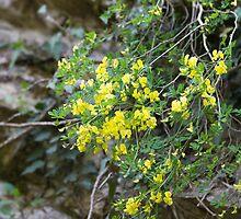 flowers in the rock by spetenfia