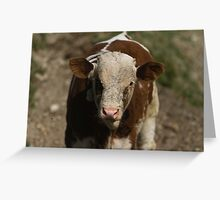 cows in the meadow Greeting Card