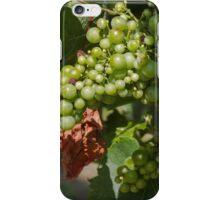 vineyard in spring iPhone Case/Skin
