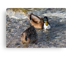 ducks on lake Canvas Print