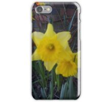 Golden Narcissus Daffodils Of Wales iPhone Case/Skin