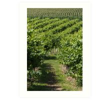 vineyard in spring Art Print