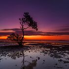 Mangrove Delight - Wellington Point Qld Australia by Beth  Wode