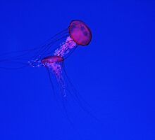 The Dance Of The Jellyfish by Debbie Oppermann