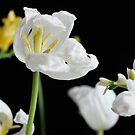Flowers on black background by Talida Pacurar