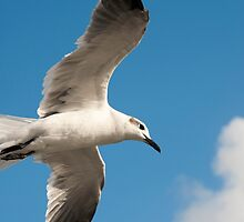 Gull's Eye View by Donna Adamski