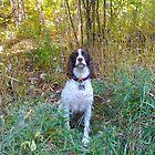 Dog Days in Fall by MarianBendeth
