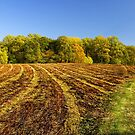 Harvest Time by cclaude