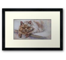 Cat Art - Long Haired Cat Staring at You Framed Print
