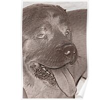 abstract dog Poster