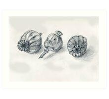 Oriental Poppy Pods Art Print