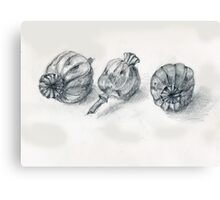 Oriental Poppy Pods Canvas Print