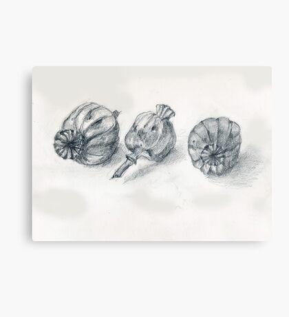 Oriental Poppy Pods Metal Print