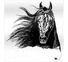 black arabian head Poster