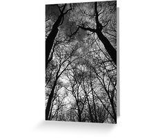 Tall Trees in Spring 2 BW Greeting Card