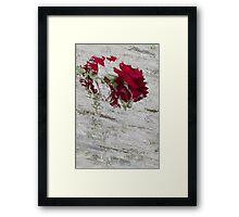 roses in the garden Framed Print