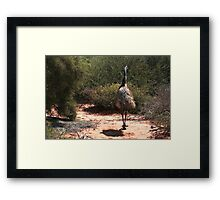 Blending in with the bush at Monkey Mia Framed Print