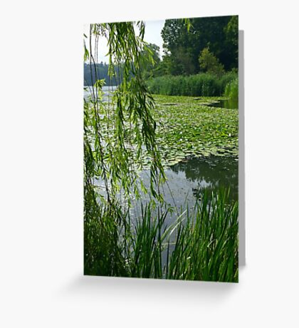 High Park Green  Greeting Card