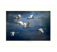 Tundra Swans: Tundra Bound Art Print