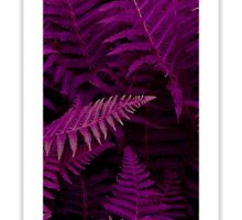 I purple fern Sticker