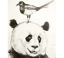 Panda and the Magpie Photographic Print