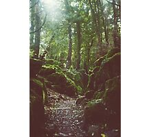 Forest of Dean Photographic Print