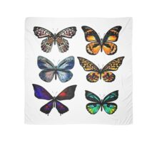 Fresh butterflies : New arrival in our Designers shop Scarf