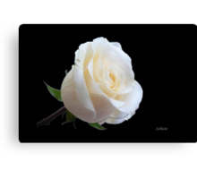 A rose from a rose Canvas Print