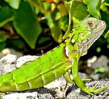 Bright Green Iguana by Amy McDaniel