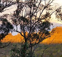 Bush Evening by Harry Oldmeadow
