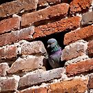 Pigeon Holed by Rae Tucker