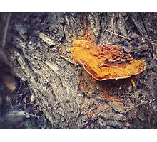 Forest Friend Photographic Print