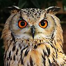 Boris the Eurasian Eagle Owl by AnnDixon