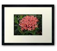 Bouquet of red Framed Print