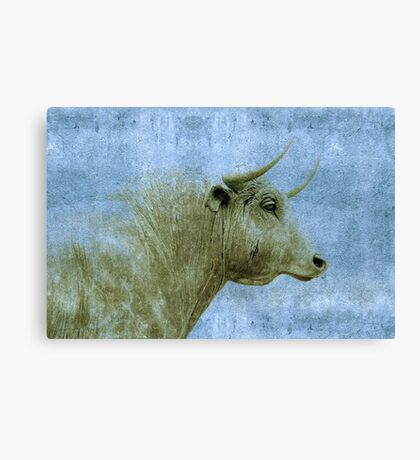 the careful bull Canvas Print