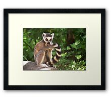 My Tail Looks Great Framed Print
