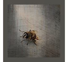 Is there now a fly Photographic Print
