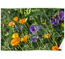 Desert Wildflowers Poster