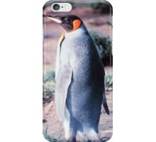 King Penguin on Heard Island iPhone Case/Skin