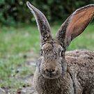 Big bunny by AleFletcher