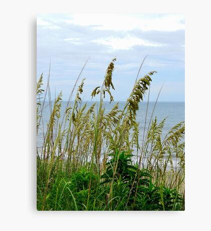 Dune Grass, Nags Head Canvas Print