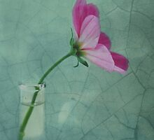The flower speaks of love silently, in a language known only to the heart by Anne Seltmann