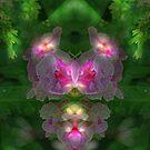 Mirrored Phlox by Eileen McVey